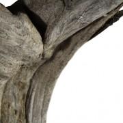 Drijfhout-tafellamp-3